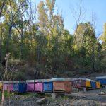 Alveari per la produzione del miele
